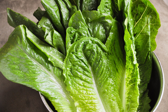 Romaine Lettuce | Tem-Cole | Top Class | TC Marketing