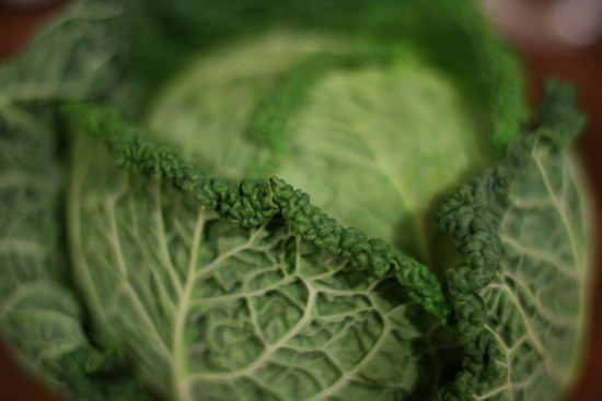 Savoy Cabbage | Tem-Cole | Top Class | TC Marketing