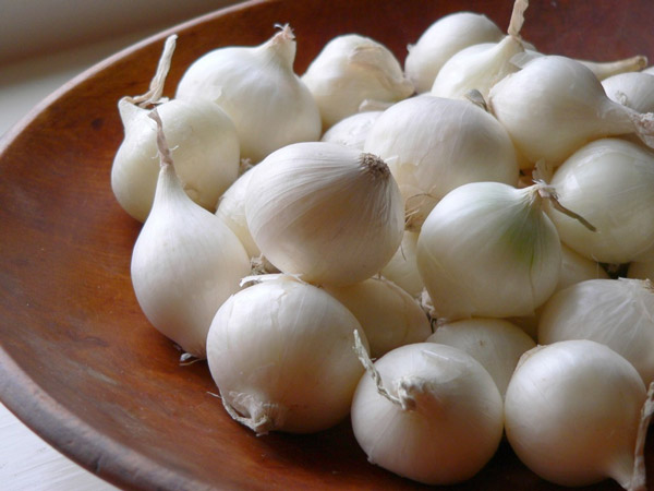 White Onions | Tem-Cole | Top Class | TC Marketing